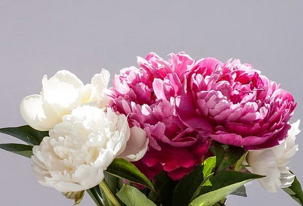 Pentecost Landscapes Bunch Nature Peony Bouquet Gr
