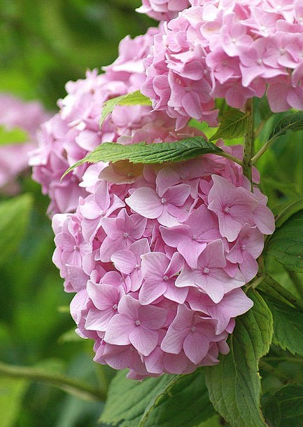 Flower Floret Landscapes Nature A Flower Garden Ge