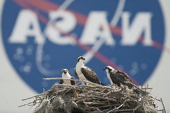 Nest Shell Landscapes Natures Nature Osprey Birds