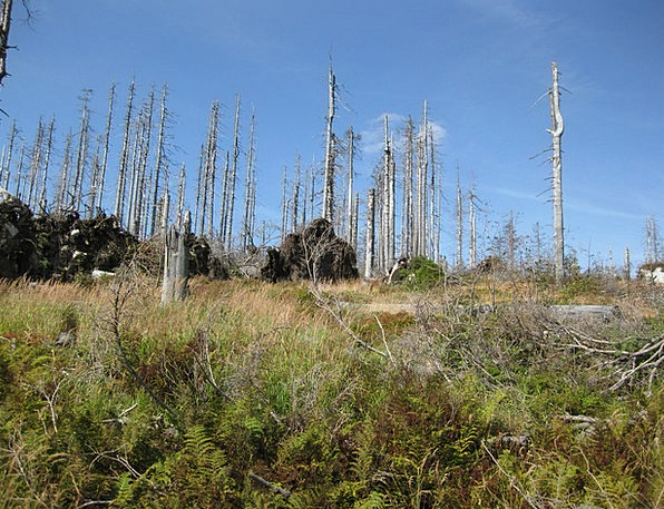 Dead Wood Landscapes Nature Forest Woodland Dying