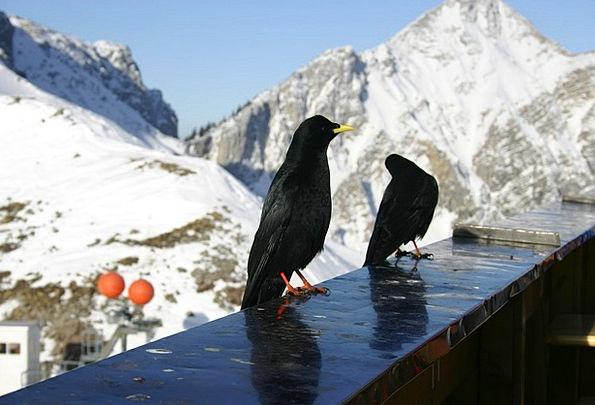 Austria Tannheimertal Tyrol Füssener Jackson Mount