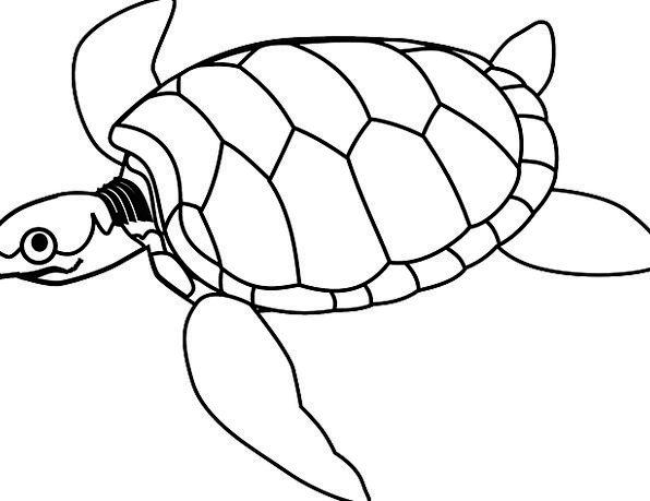 Turtle Marine Swim Dip Sea Fins Flippers Head Cara