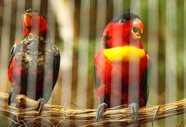 Animal Physical Bill Behind Behindhand Beak Fly Ba