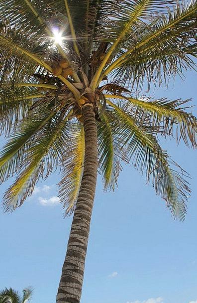 Palm Tree Landscapes Nature Sky Blue Sun Costa Sum