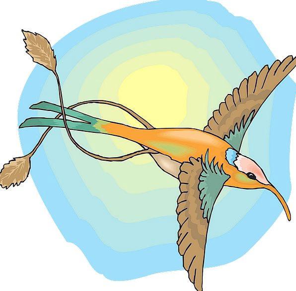 Sun Blue Bird Fowl Sky Wings Annexes Hummingbird F
