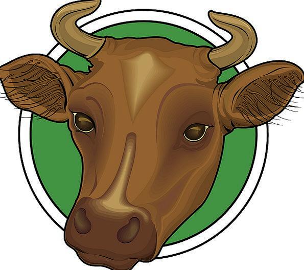 Head Skull Chocolate Cow Intimidate Brown Horns Si