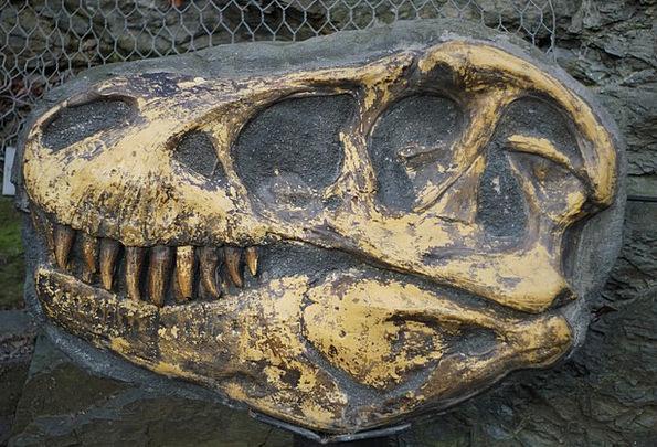 Tyrannosaurus Jawbone Fossil Relic Bone Excavation