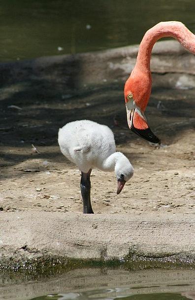 Flamingo Inexperienced Mother Ma Fledgling Small B