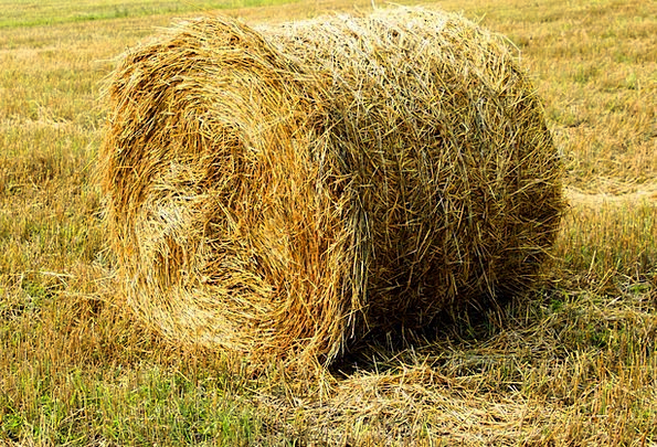 Straw Grass Bundles Harvest Crop Bales Field Arena