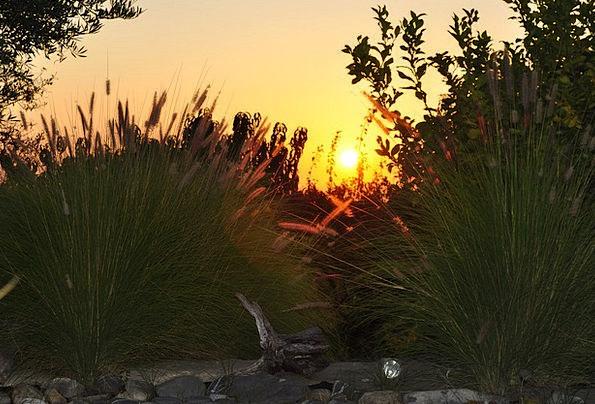 Sunset Sundown Vacation Lawns Travel Evening Twili