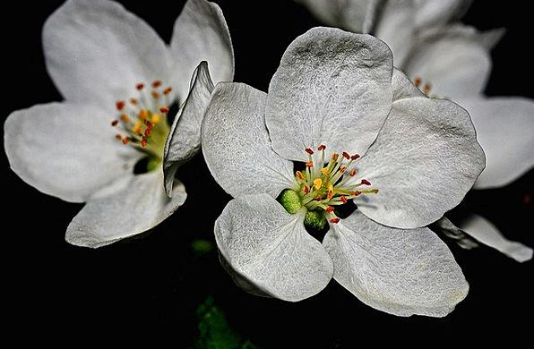 Blossoms Flowers Landscapes Nature Spring Coil App