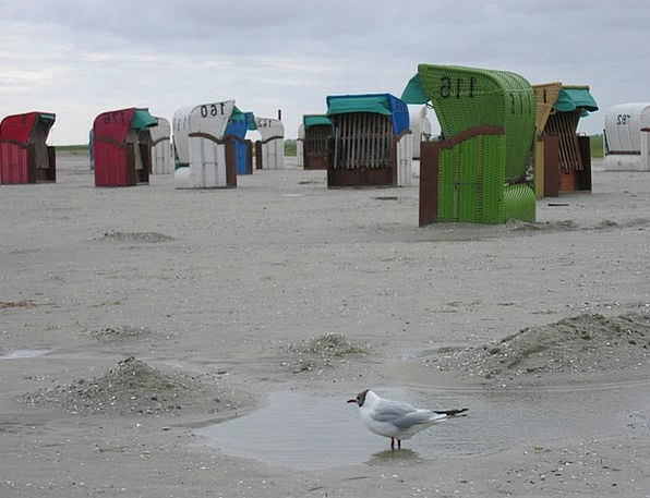 Clubs Bats Vacation Seashore Travel Sand Shingle B