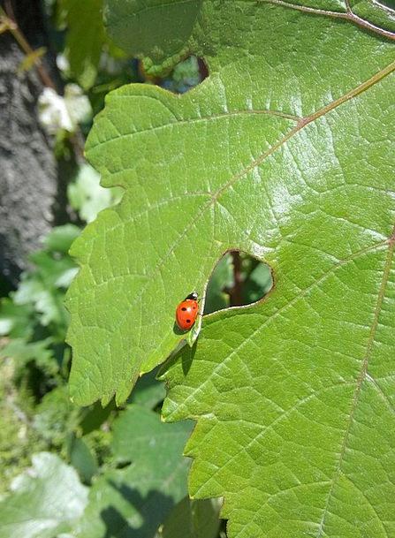 Ladybug Greeneries Suspended Postponed Leaves Leaf