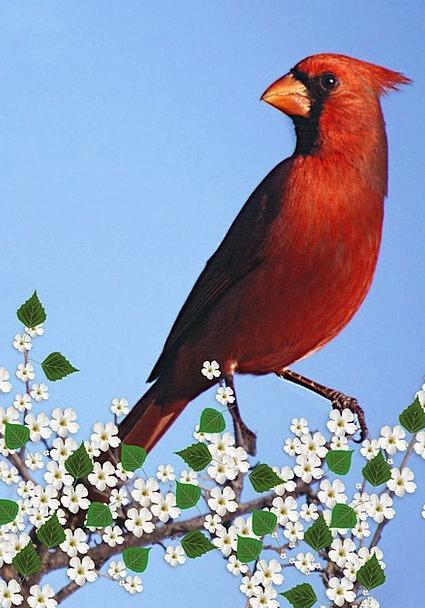 Cardinal Male Landscapes Nature Carddigital Flower