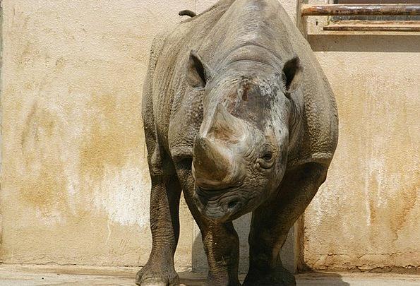 Sai Physical Zoo Menagerie Animal Corner Angle