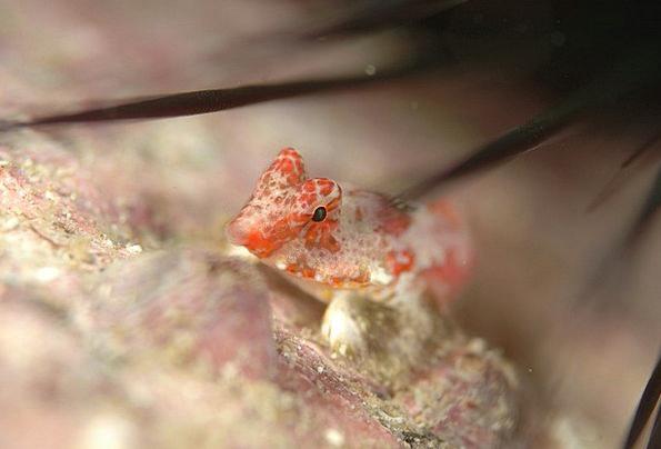 Fish Angle Sea Marine Underwater Life Diving Headf