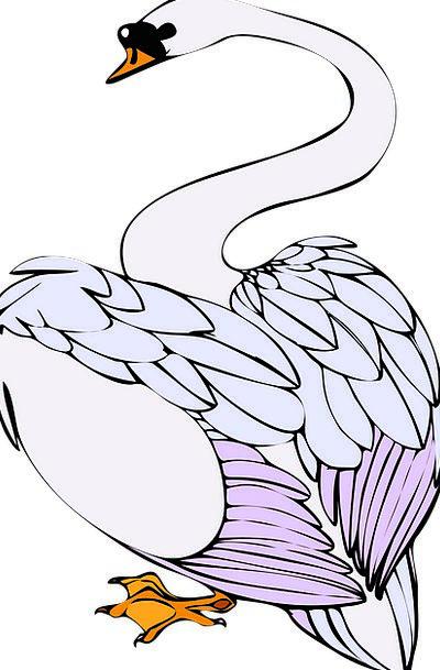 Swan Wander Fowl White Snowy Bird Animal Physical