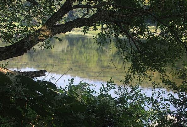 River Stream Landscapes Sapling Nature Water Aquat