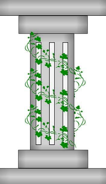 Pillar Support Buildings Architecture Vine Creeper