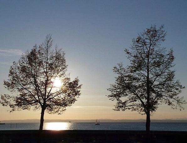Sunset Sundown Vacation Plants Travel Water Aquati