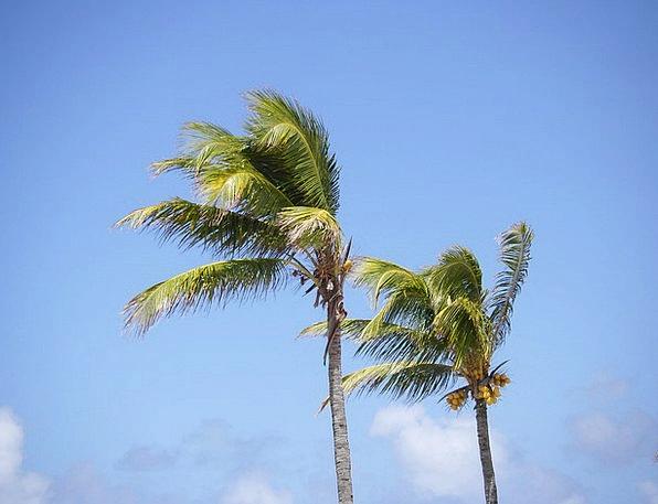 Palm Trees Vacation Seashore Travel Mauritius Beac