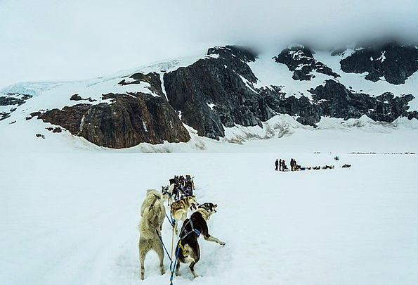 Sled Dogs Dog Sled Alaska Mendenhall Glacier Sled