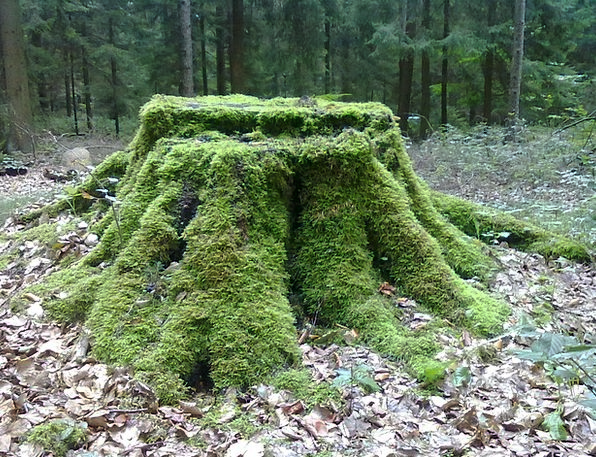 Tree Stump Landscapes Nature Forest Woodland Moss