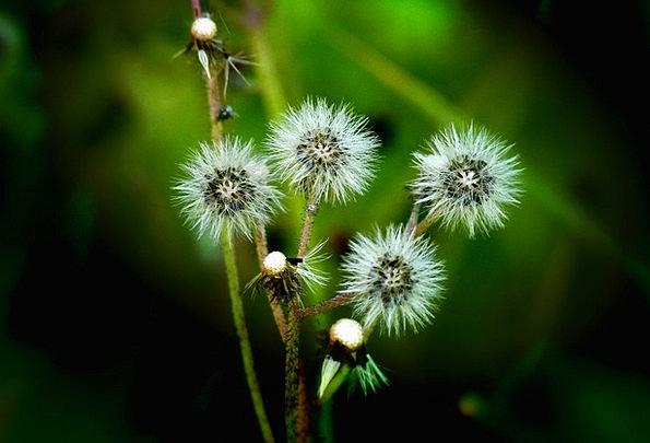 Wildflower Weed Landscapes Floret Nature Plant Veg