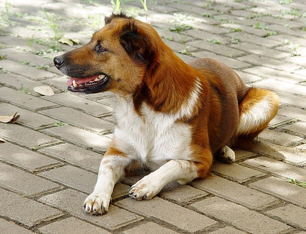 Animals Faunae Canine Mix Combination Dog