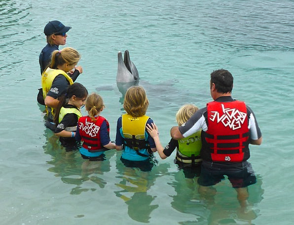 Dolphin Presentation Wildlife Nature Performance A