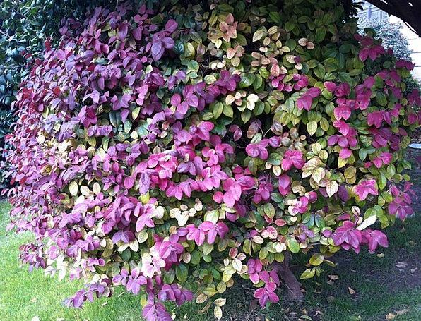 Garden Plot Landscapes Vegetable Nature Red Leaf P