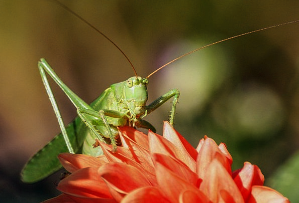 Grasshopper Landscapes Countryside Nature Insect B