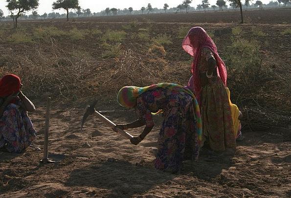 Women Females Craft Effort Industry Rajasthan Work