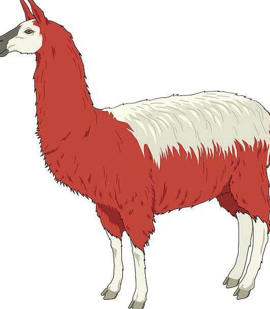 Llama Hairy Red Bloodshot Shaggy White Snowy Color