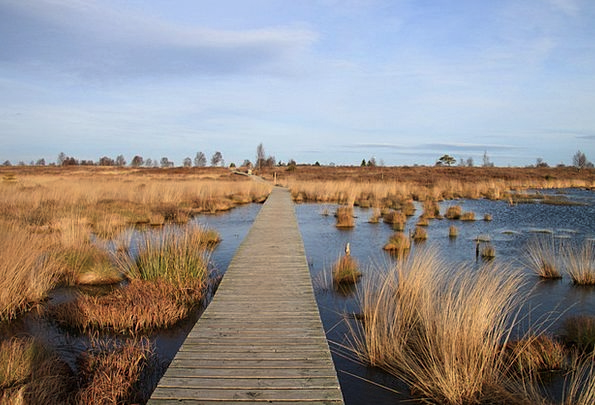 Moor Heath Landscapes Nature Away Absent Moorland