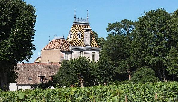 Vineyard Winery Creeper Vines Creepers Vine Grapes