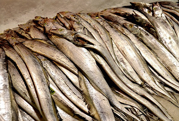 Blet Fish | Animals Faunae Drink Angle Food Belt Fish Fish Hairtail