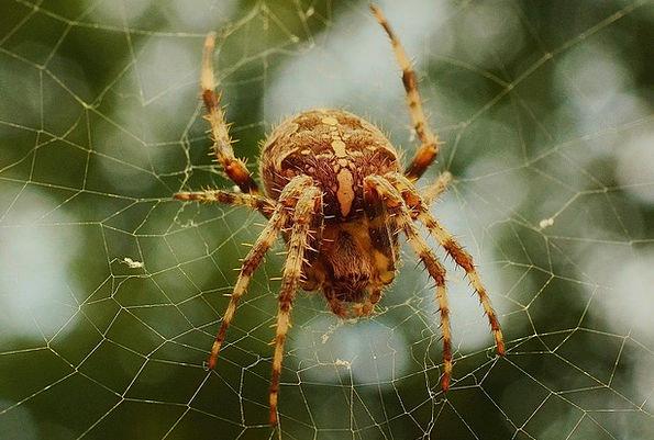 Spider Web Mesh Spiderweb Network Net Creepy Insec
