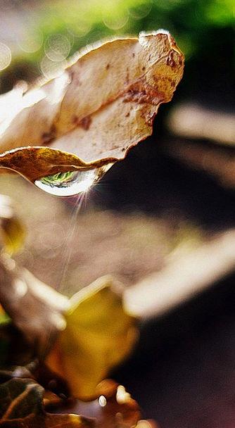 Drop Droplet Landscapes Aquatic Nature Leaf Foliag