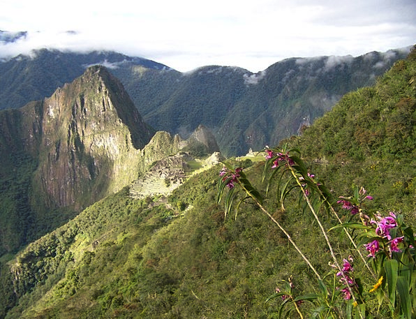 Machu Picchu Landscapes Nature Orchids Peru Landsc