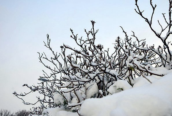 Winter Bushes Landscapes Scrubs Nature Winter Seas