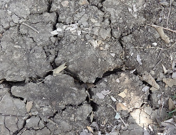 Black Soil Thirsty Dried Dehydrated Dry Dharwad Cr