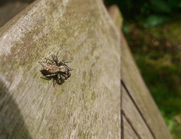 Spider Quarry Captured Took Prey Caught Wedged Hun