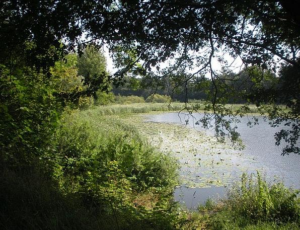 Lake Freshwater Landscapes Pool Nature Scenery Set