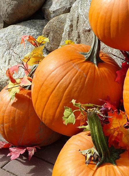 Pumpkin Drink Food Fall Reduction Autumn Huge Frui