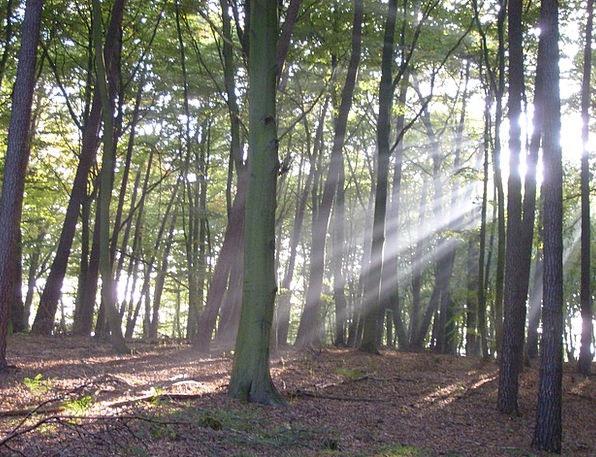 Forest Woodland Landscapes Plants Nature Sunbeam R