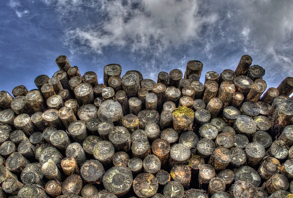 Logs Woods Timber Wooden Wood Lumber Woodpile Fore