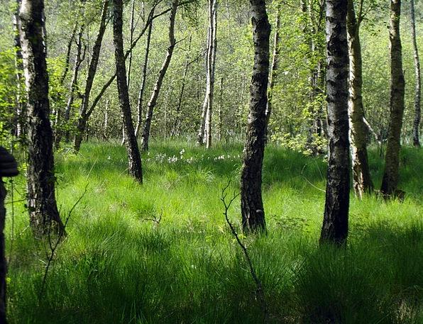 Moorland Heath Landscapes Woodland Nature Birch Ca