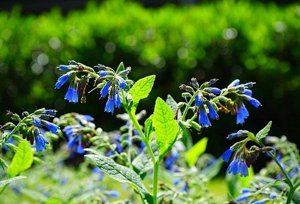 Flowers Plants Landscapes Azure Nature Rough Comfr