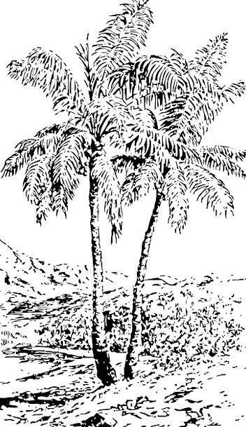 Palms Tributes Landscapes Plants Nature Tropical H